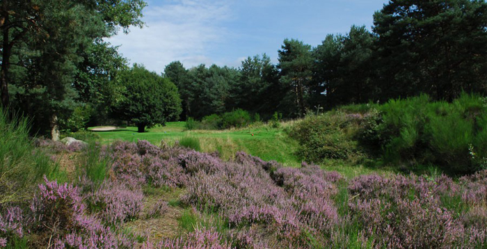 golf_de_fontainebleau_trou14