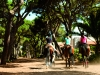 the-oitavos-hotel-and-golf-portugal-ridding-centre-equestre